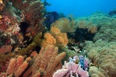 риф индонезийца коралла стоковые изображения rf