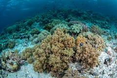 Риф и морская флора и фауна обилия в национальном парке Wakatobi, Indone Стоковое Фото