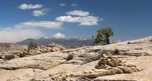 Риф капитолия, центральная Юта, США Сиротливая сосна на утесах Стоковые Фото