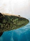 риф картошки трески барьера Австралии гигантский большой Стоковое фото RF