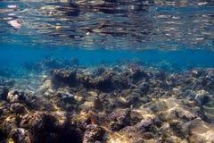риф отмелый стоковые изображения rf