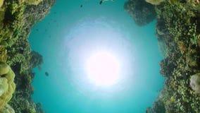 риф рыб коралла тропический видеоматериал