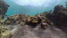 риф рыб коралла тропический сток-видео