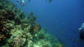 риф рыб коралла тропический акции видеоматериалы