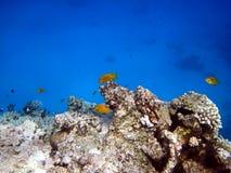 риф рыб коралла Стоковая Фотография RF