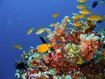 риф рыб коралла Стоковое фото RF