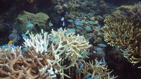 риф рыб коралла тропический philippines видеоматериал