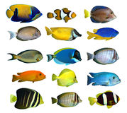риф рыб тропический стоковое фото rf