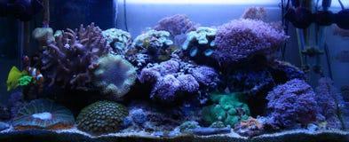 Риф соленой воды Стоковое фото RF