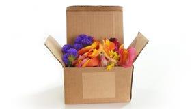 Рифлёная картонная коробка открытая с лепестками цветка внутрь на белой предпосылке Стоковая Фотография