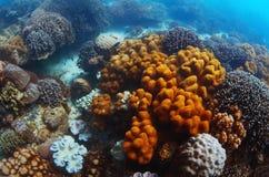 риф Стоковая Фотография