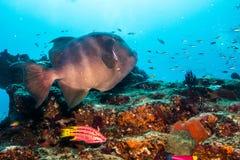 Риф Baja стоковые фото