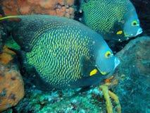Риф Caribean Стоковое фото RF