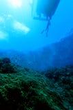 риф pacific indo коралла стоковое изображение rf