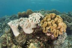 риф philippine коралла Стоковое Фото