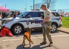 Ричмонд, KY США - 31-ое марта 2018 - пасха Eggstravaganza офицер K9 демонстрирует собачьи методы и учебные упражнени Стоковая Фотография RF