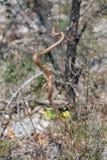 ровная змейка Стоковое Фото