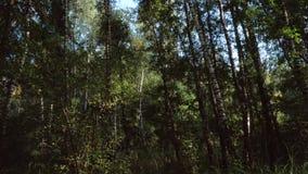 Ровное движение в зеленом лесе видеоматериал