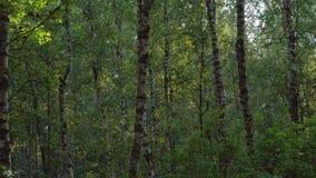 Ровное движение в зеленом лесе акции видеоматериалы
