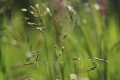 Ровный солнцеворот луг-травы стоковое изображение rf