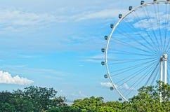 Рогулька Сингапур Стоковые Изображения