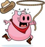 родео свиньи Стоковые Изображения