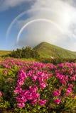 Рододендроны на Chernogor о Goverly Стоковые Фотографии RF