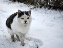 Род мясоеды семьи кота стоковая фотография rf
