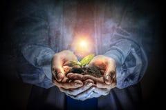 Рождение новой жизни стоковое фото rf