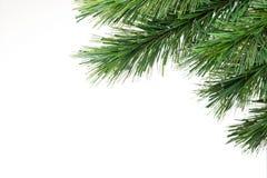 рождественская елка ветви предпосылки Стоковые Фото