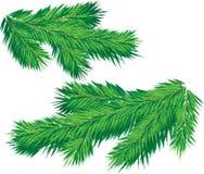 рождественская елка ветви иллюстрация вектора