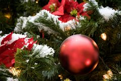 Рождественская елка зимнего отдыха с красными орнаментами, светами, pointsettas, снегом стоковая фотография