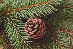 Рождественская елка и шишка стоковые фото