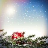 Рождественская елка с красной безделушкой стоковая фотография rf
