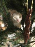 Рождественские елки влюбленности котов Стоковое Изображение RF