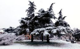 Рождественские елки в парке стоковые фото