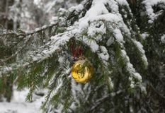 Рождество в лесе Стоковое Изображение RF