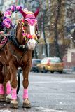 Рождество в Rozhdestvenskya лошадь стоковое изображение rf