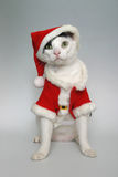 рождество готовое Стоковые Фото