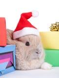 рождество коробок коричневое изолировало кролика стоковые изображения rf