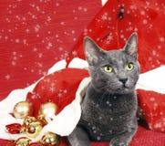 рождество кота Стоковые Фото