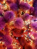 рождество моя версия вектора вала портфолио Конец-вверх рождественской елки Гирлянды на конце-вверх мех-дерева Красные и фиолетов Стоковые Фото