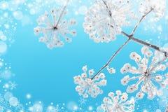 рождество предпосылки красивейшее голубое Стоковое Изображение