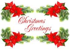 рождество цветет красный цвет poinsettia стоковые фото