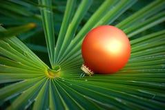 рождество экзотическое Стоковые Фото