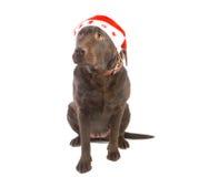 рождество labrador Стоковое фото RF