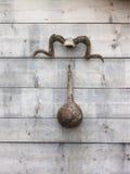 Рожки козы Стоковое Фото