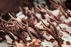 Рожки оленей стоковое фото