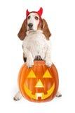Рожки дьявола гончей собаки выхода пластов нося Стоковые Фотографии RF