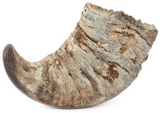 Рожок индийского буйвола Стоковое фото RF